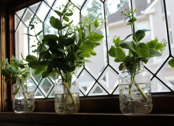 autumn joy sedum cutting in a mason jar in front of a leaded window