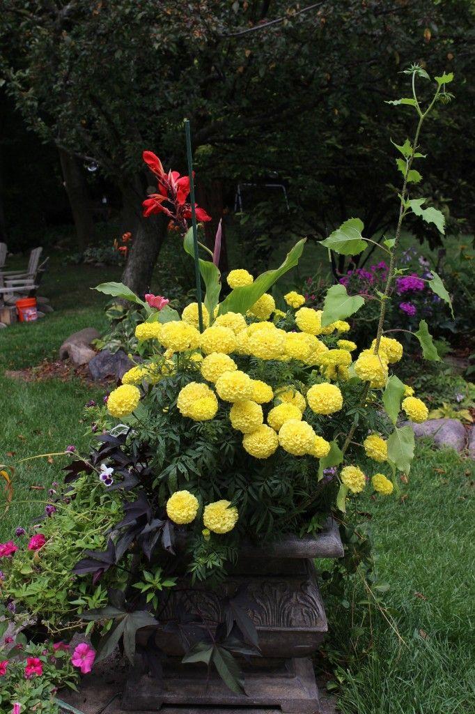 Pretty planters, planter ideas.