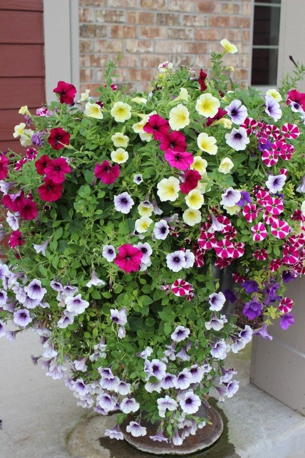 A beautiful cascading flower planter with multi-colored petunias