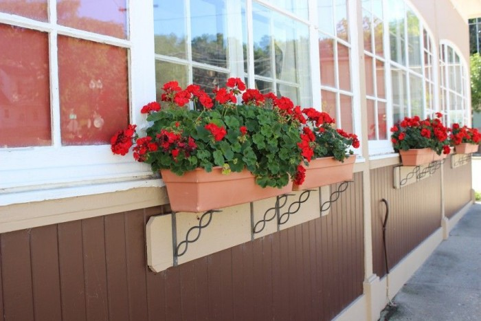 Beautiful red geraniums in window box planters.