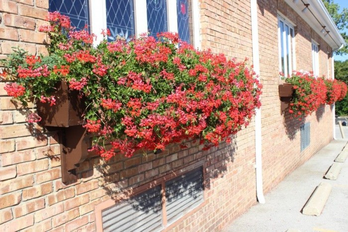 Beautiful red flowers in a window box.