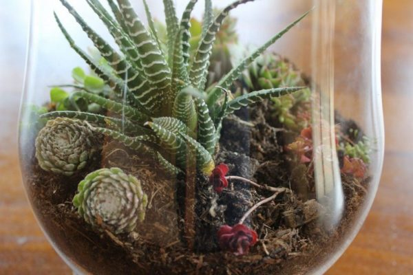 Terrarium project – getting some green into the house.