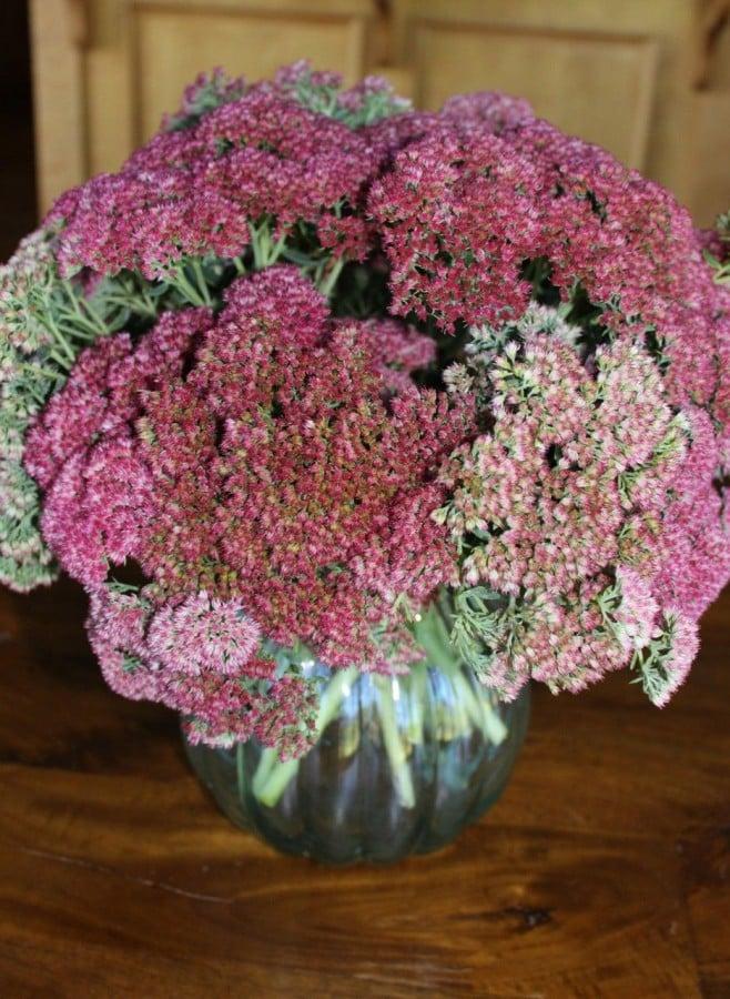Autumn Sedum in a vase