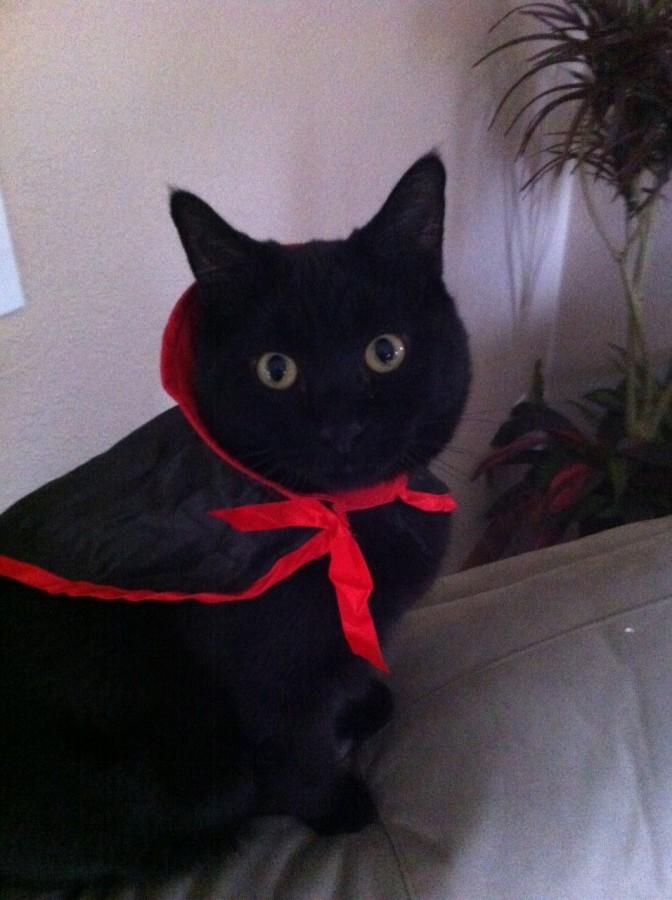 My Vampire Kitty.