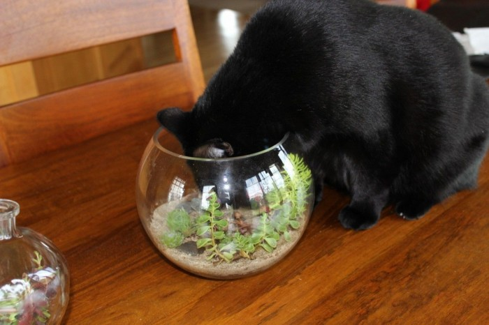 Inspecting the terrarium.