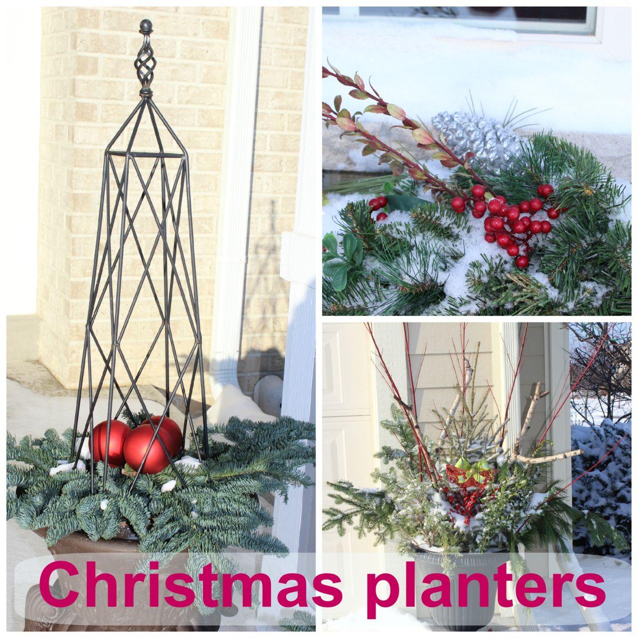 Christmas Planters & Window Boxes.