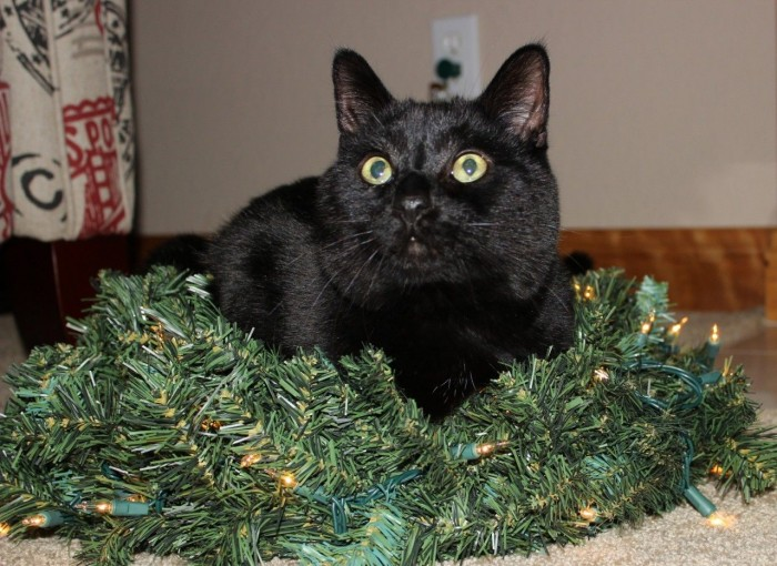 My Raji pie. Sitting in the middle of my wreath when I put it down for a moment.