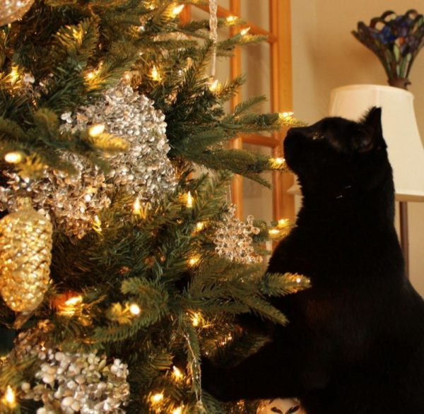 my black cat and the Christmas tree