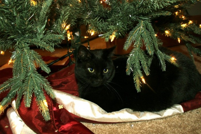Our kitty under the tree. His new favorite spot.