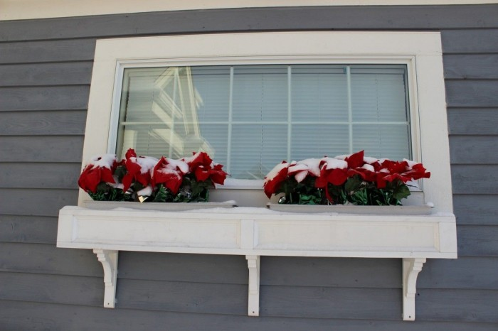 Poinsettias in a windowbox