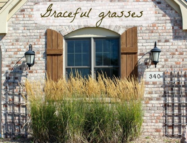 Landscaping with grasses – some ideas from my neighborhood!