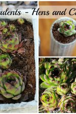small succulent container gardens