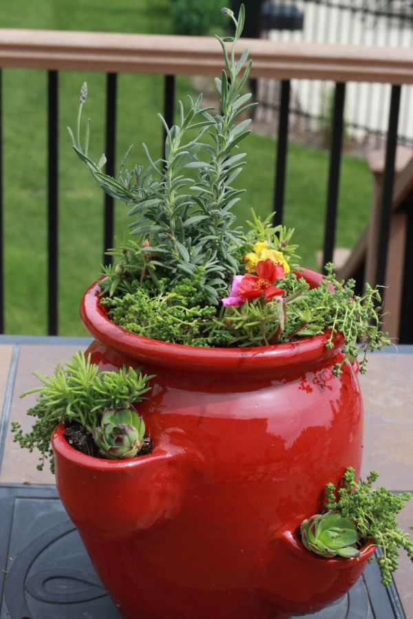 Plant some succulents in your strawberry container!