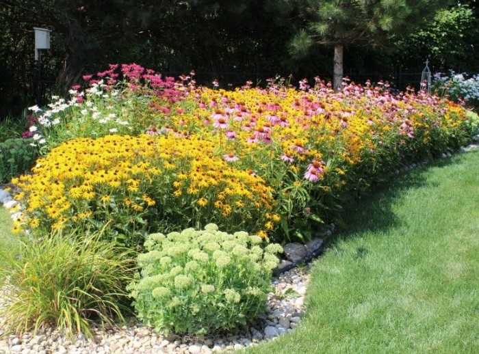 beautiful garden full of back eyed Susans, cone flowers, daisies and sedum.