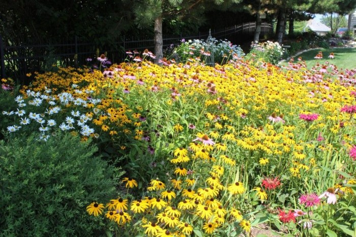 beautiful garden with cone flowers, daisies, and zinnias