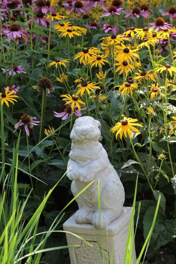 bunny statue with background of black eyed Susan's and cone flowers