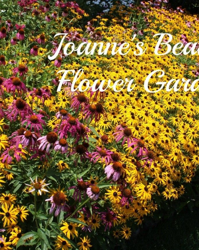 Joanne's Beautiful Garden