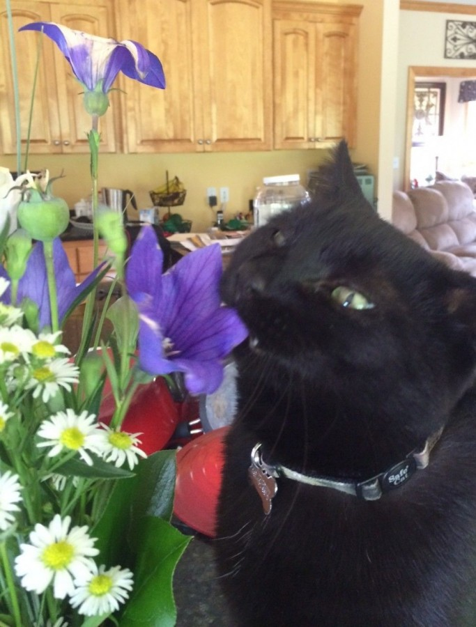my cat eating a flower