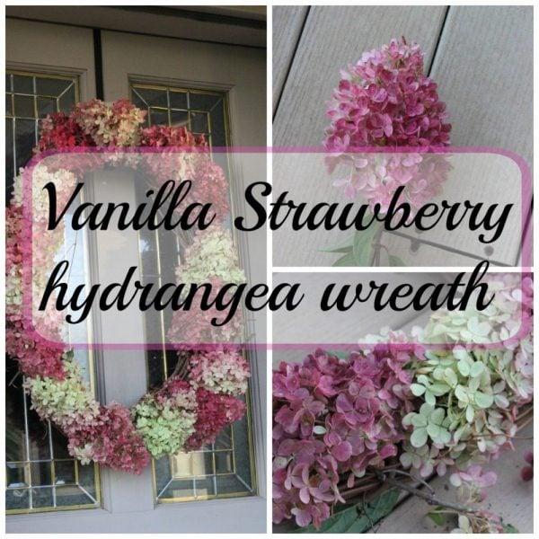 Hydrangea wreath with vanilla strawberry hydrangeas