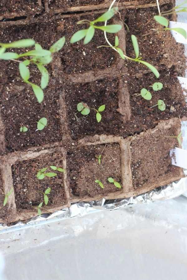 seed starting greenhouse