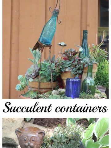 Creative succulent containers