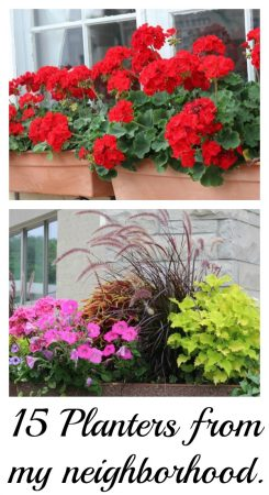15 pretty planters from my neighborhood.