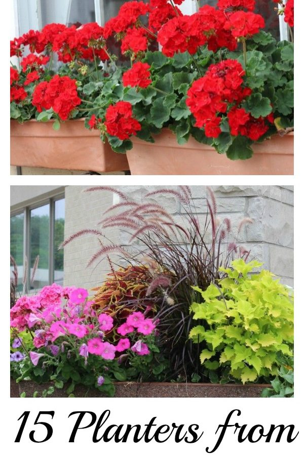15+ Pretty Planters – in my community!