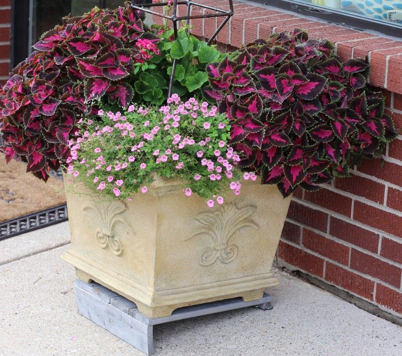 Pretty planter & container ideas with purple coleus