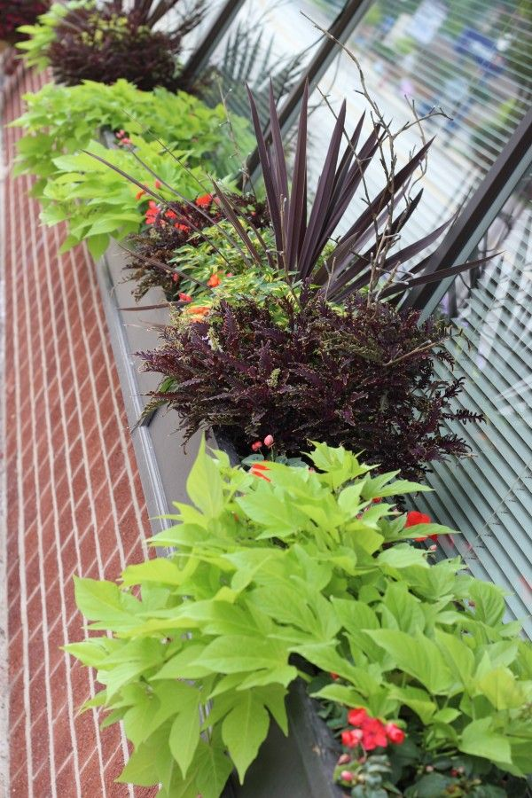 Shade plants in container window boxes.