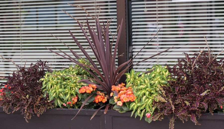 Pretty planter & shade container ideas with orange begonia