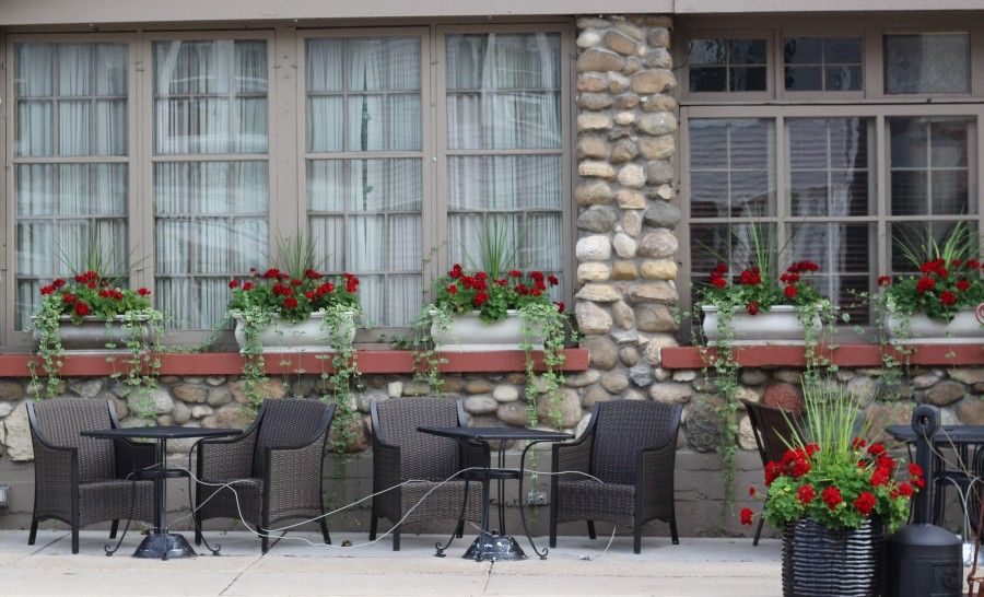 Red geraniums with draping vine on restaurant windows