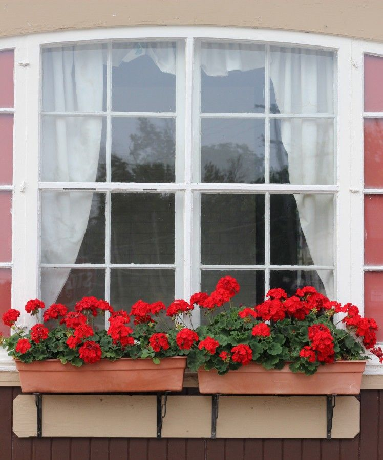 Red geraniums in window boxes