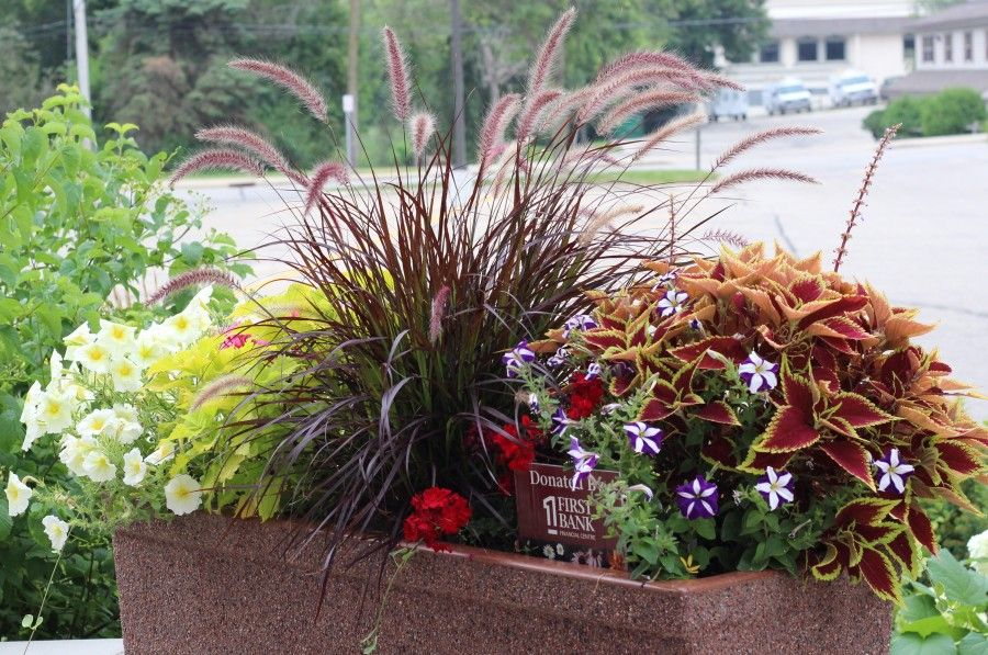 Pretty planter with purple fountain grass and coleus