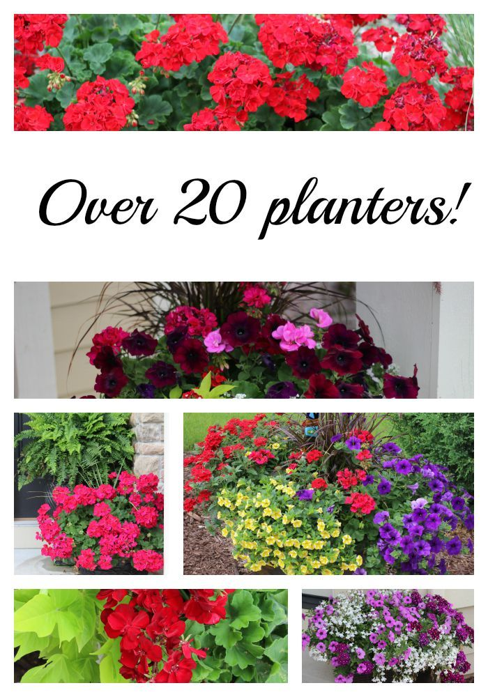 Over 20 planters from my neighborhood. Pin now for ideas for next year!