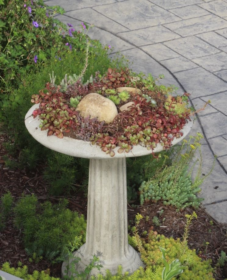 cement birdbath as a succulent container garden