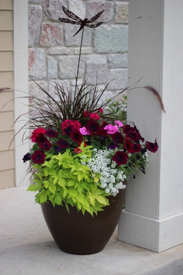 Planter with red geraniums, spiky plants and green sweet potato vine draping.