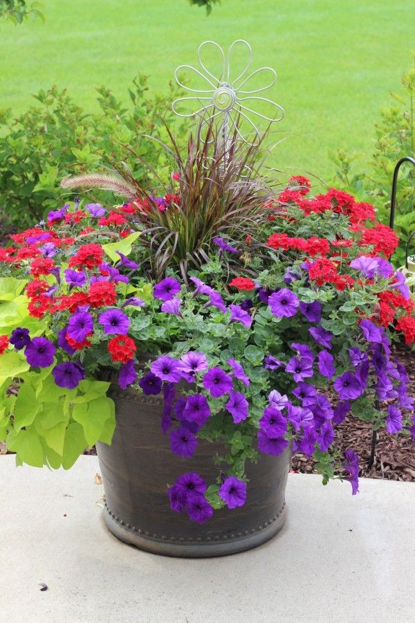 Red, purple flowers in a container with purple fountain gras