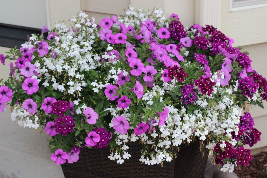 Monochromatic planter with flowers that are shades of purple and white