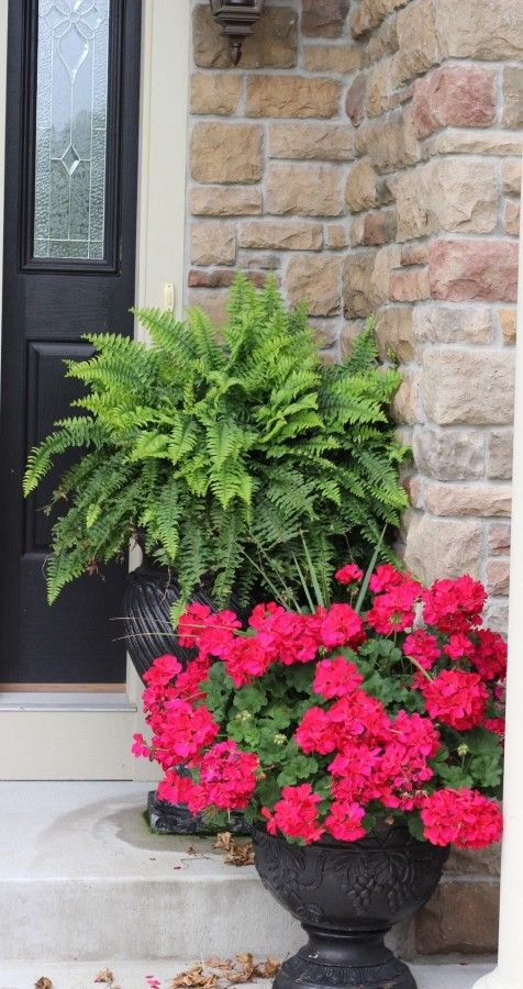 big fern in a container garden behind red geraniums in a planter