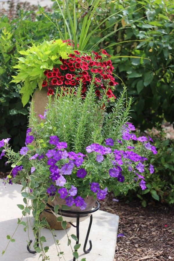 One planter with purple petunias and lavender. The second planter with red petunias and sweet potato vines