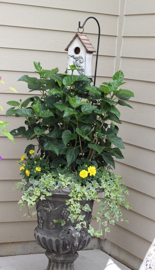 Planter with yellow marigolds, draping ivy and a hibiscus plant.