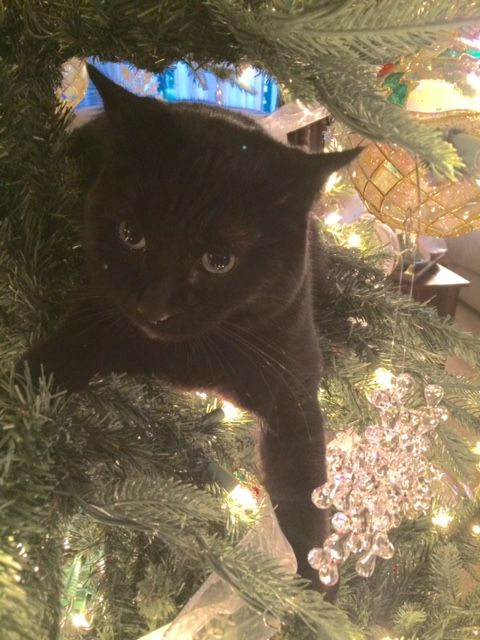 My black cat peeking out from the tree at eye level!
