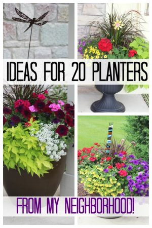 Brightly colored flowers in planters