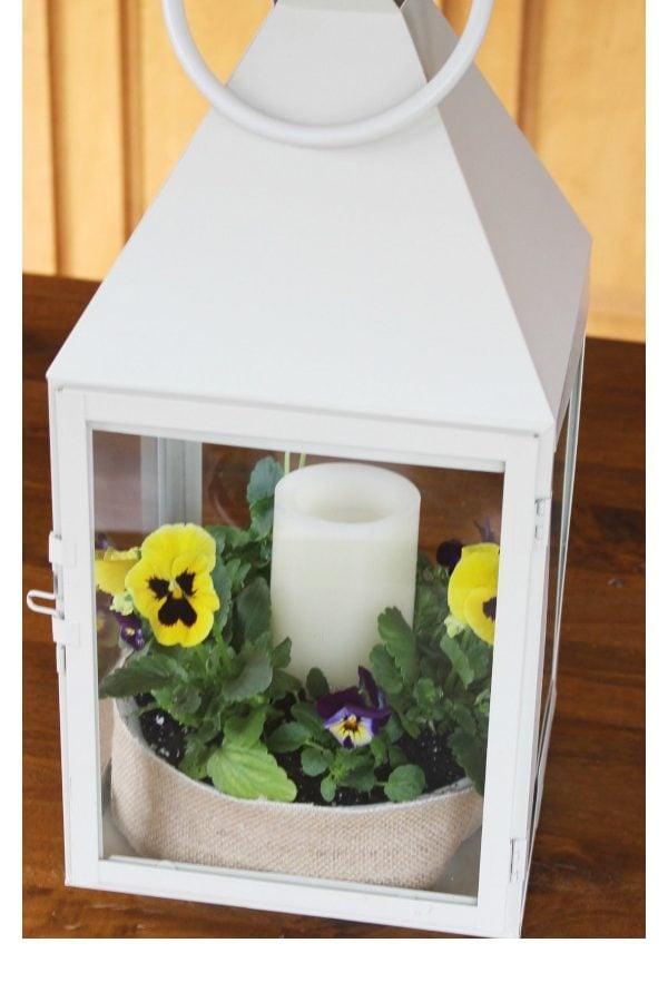 My Spring Pansy Lantern