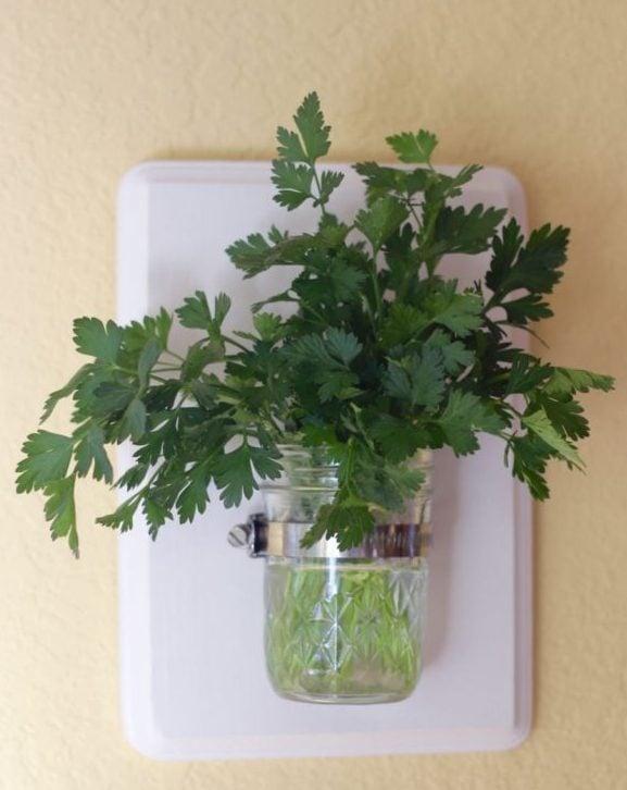 Mason Jar Vase with herbs - parsley