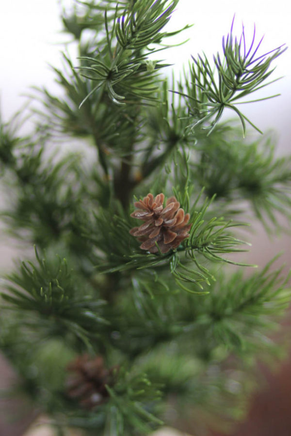 Inexpensive Christmas Decorations – I guess I have a tree obsession!
