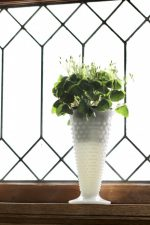 A shamrock plant in a white milkglass vase