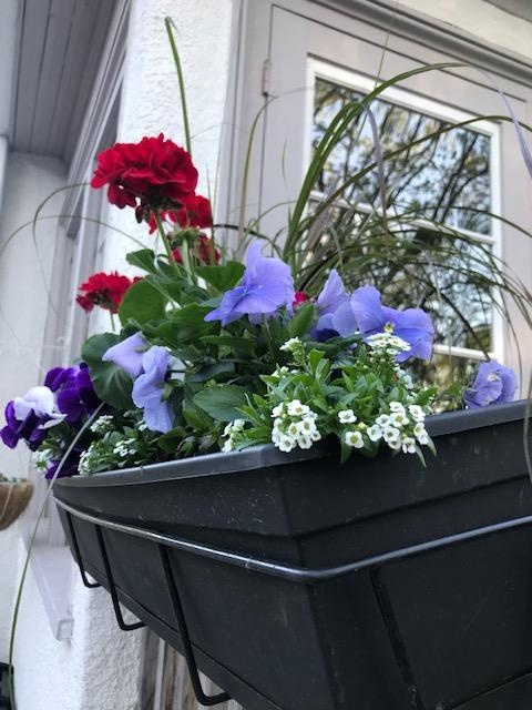 black plastic window box with red geraniums and purple pansies.