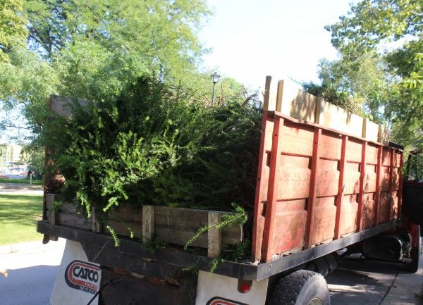 A truck filled with yard waste from the removed hydrangeas