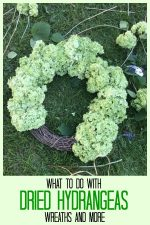Partially finished dried hydrangea wreath.